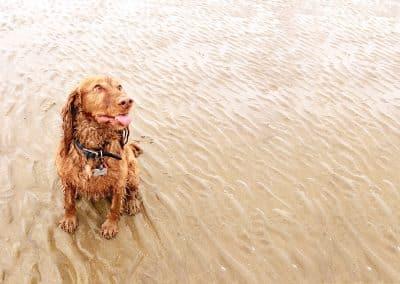 Dog Walker Hastings St Leonards Fairlight Rye