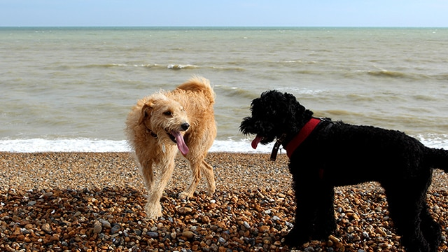 Dog Walking St Leonards on Sea Beach East Sussex Hastings Hounds Pet Care Service