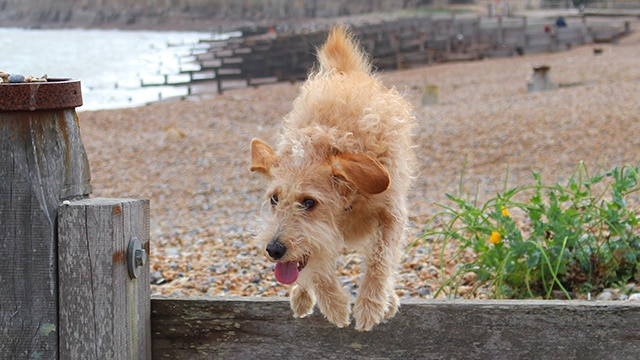 Dog Walking Winchelsea Beach East Sussex Hastings Hounds Pet Care Service
