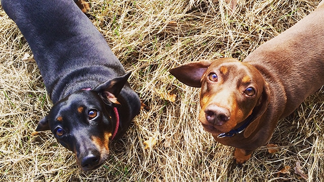 Dog Walking Country Park East Sussex Hastings Hounds Pet Care Service
