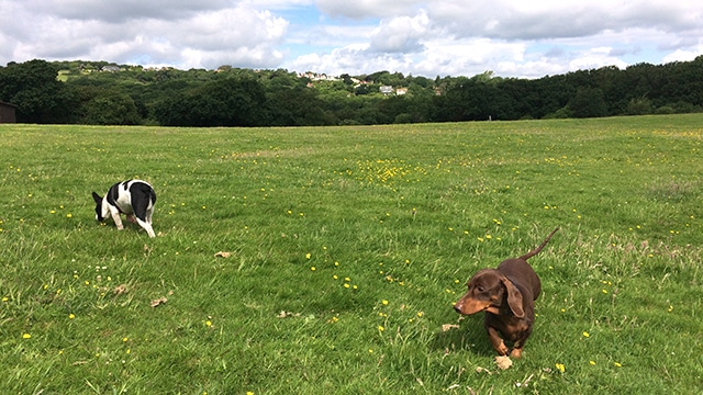 Doggy Daycare St Leonards Fairlight Hastings Hounds Pet Care Service