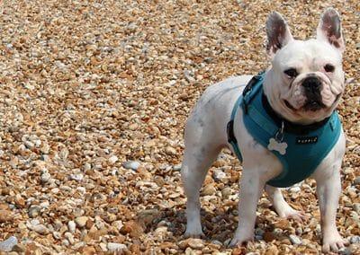 Dog walker hastings st leonards fairlight