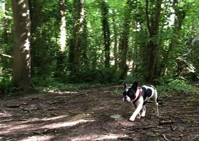 dog boarding ashford
