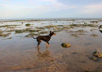 dog boarding heathfield