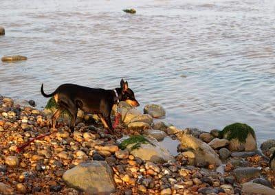 dog boarding romney marsh ashford dungeness