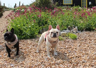 dog daycare rye battle bexhill