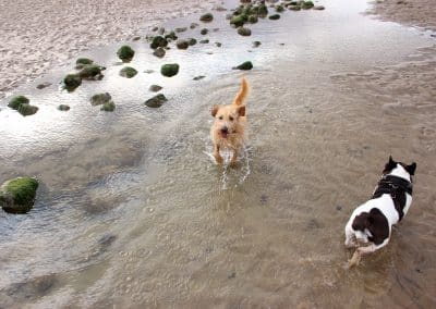 dog holidays by the sea kent east sussex