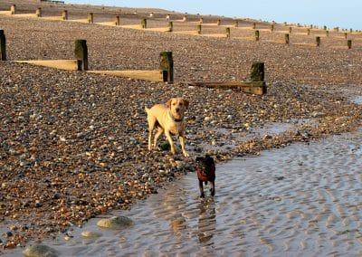 dog walker hastings