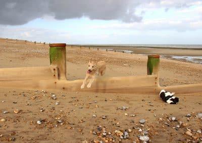 dog walker hastings st leonards rye winchelsea