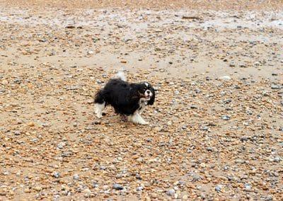 dog walker rye harbour nature reserve