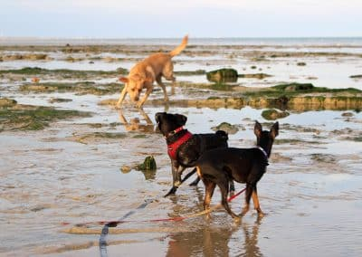 dog walker st leonards