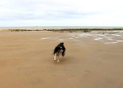 dog walking camber sands