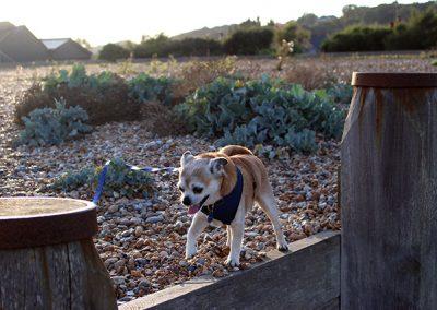 dog walking fairlight pett level
