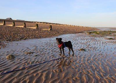 dog walking winchelsea rye