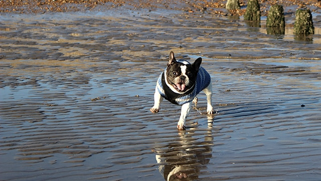 Dog Walker Pett Winchelsea Hastings Hounds Pet Care Service