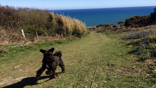 Dog Boarding Fairlight Pett Winchelsea Hastings Hounds Pet Care Service