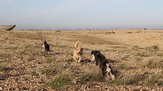 Dog Walker St Leonards Fairlight Hastings Hounds Pet Care Service