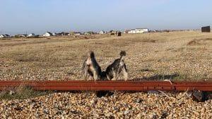 Dog Walker East Sussex Rye Hastings Fairlight