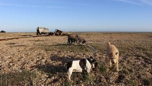 Fairlight Dog Walker Winchelsea Rye Ore St Leonards