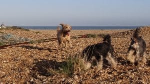 Hastings Dog Walker St Leonards Fairlight Rye
