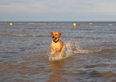 home dog boarding cranbrook kent