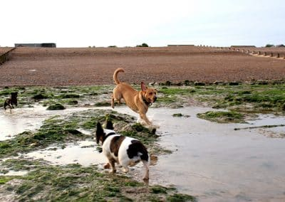 home dog boarding holidays kent