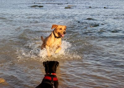 home dog boarding pevensey