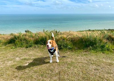 Beagle puppy Dog Daycare Hastings Country Park Fairlight Pett Winchelsea St leonards
