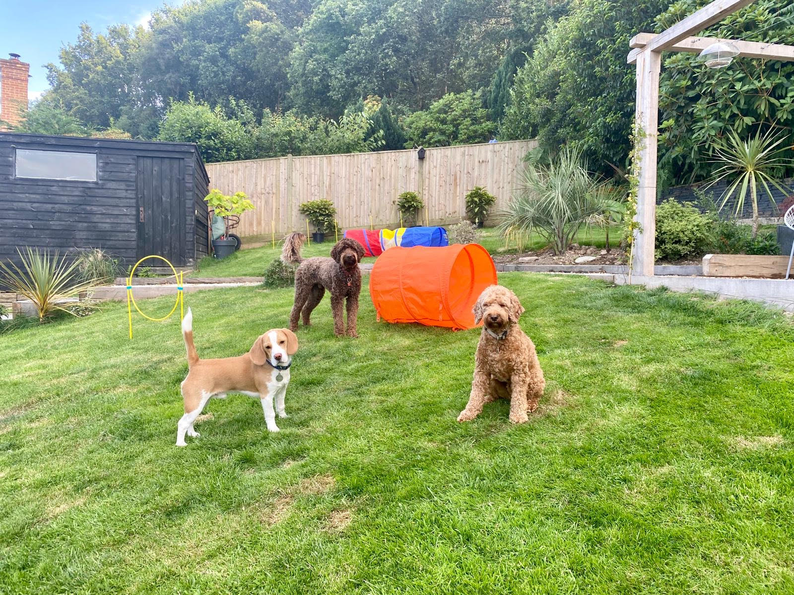 How Doggy Daycare can benefit your Dog
