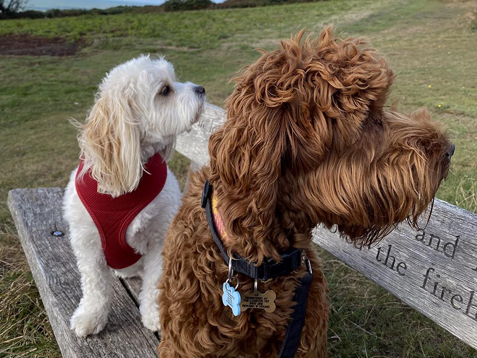 group dog walks Fairlight Pett Level Winchelsea Guestling Ore Rye Hastings St Leonards on Sea Bexhill