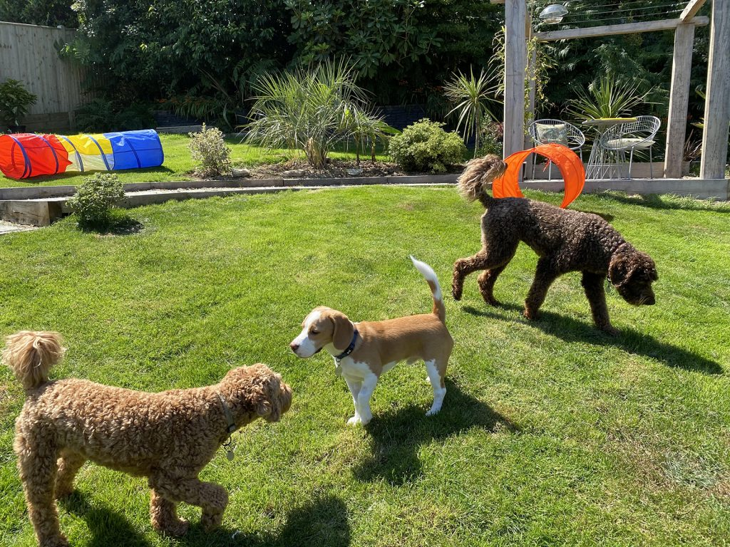hastings pet care and doggy daycare service st leonards on sea