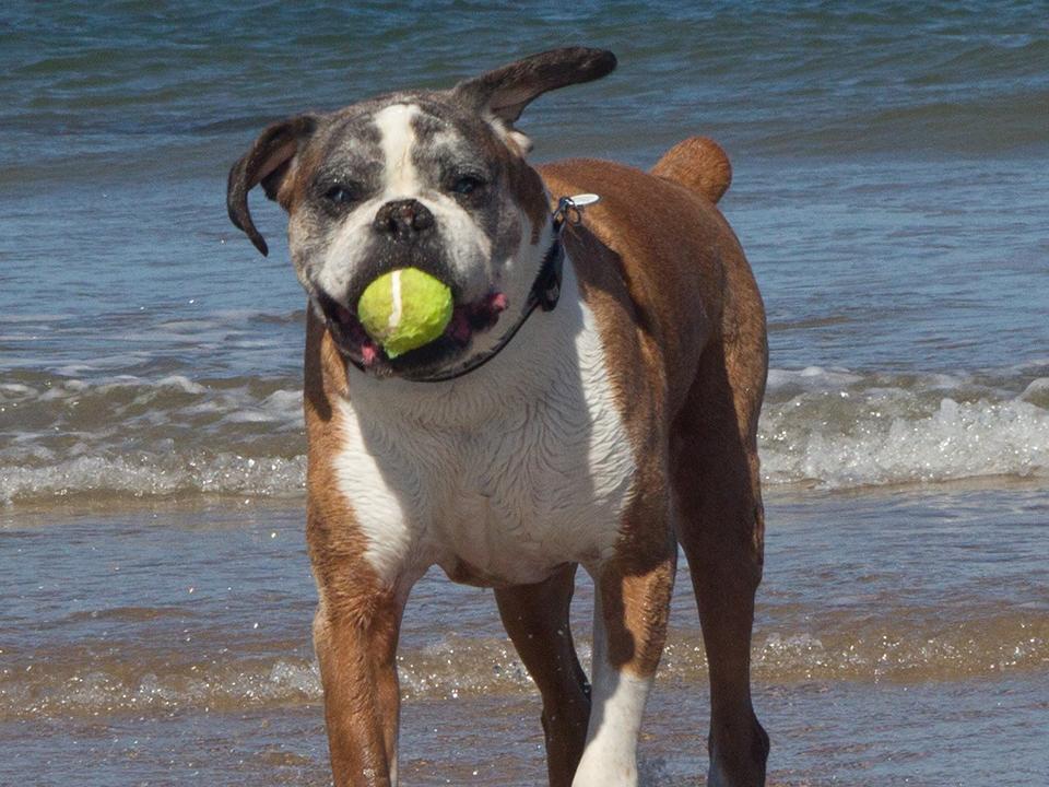 senior dog walking Fairlight Pett Level Winchelsea Guestling Ore Rye Hastings St Leonards on Sea Bexhill